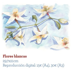 ilustrador Acuarela Flores Blancas