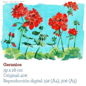 Ilustrador acuarela geranios