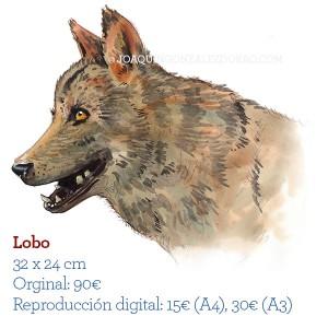 Ilustrador acuarela Lobo